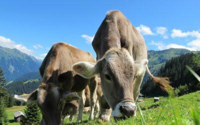 Salud y bienestar en animales de producción: productos nutracéuticos